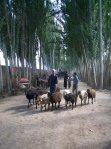 Farmer in Xinjiang